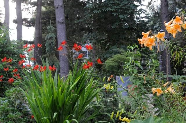 塔山植物园漫步 3_图1-13