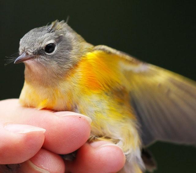 参观春溪自然中心----雀鸟大棚_图1-1