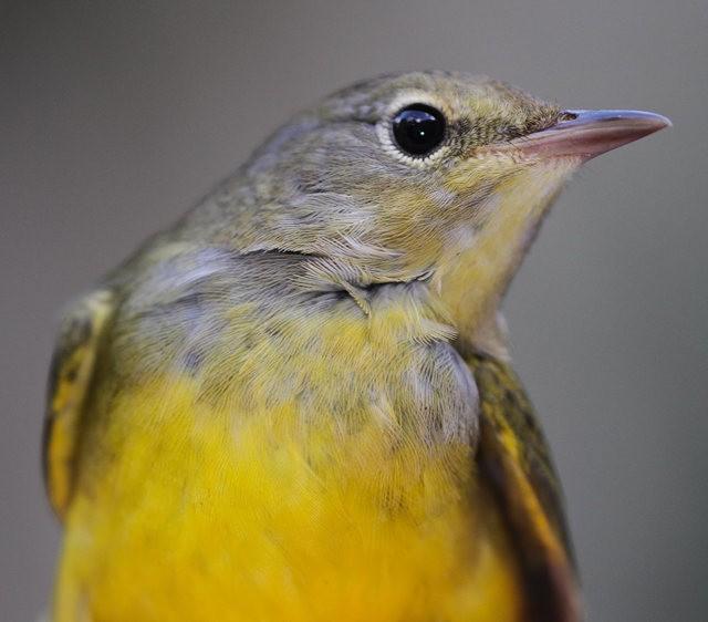 参观春溪自然中心----雀鸟大棚_图1-2