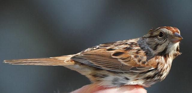 参观春溪自然中心----雀鸟大棚_图1-3