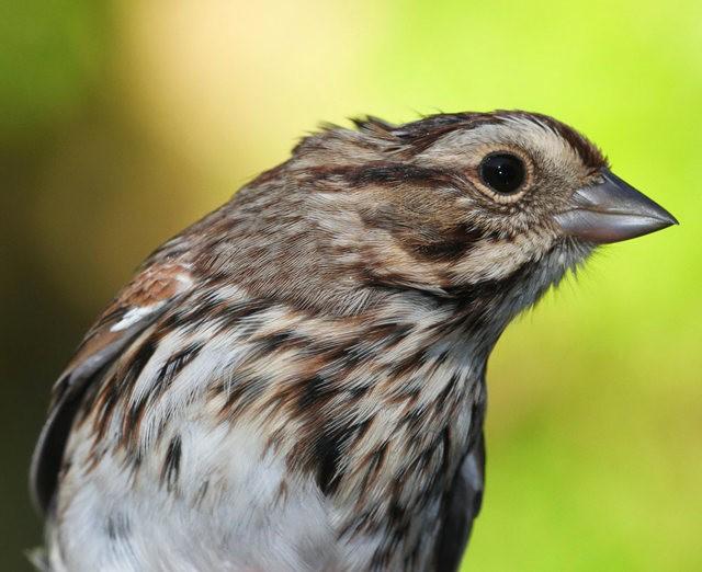 参观春溪自然中心----雀鸟大棚_图1-4