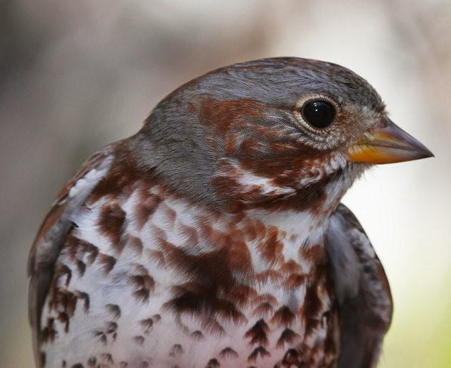 参观春溪自然中心----雀鸟大棚_图1-5
