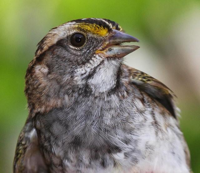 参观春溪自然中心----雀鸟大棚_图1-6
