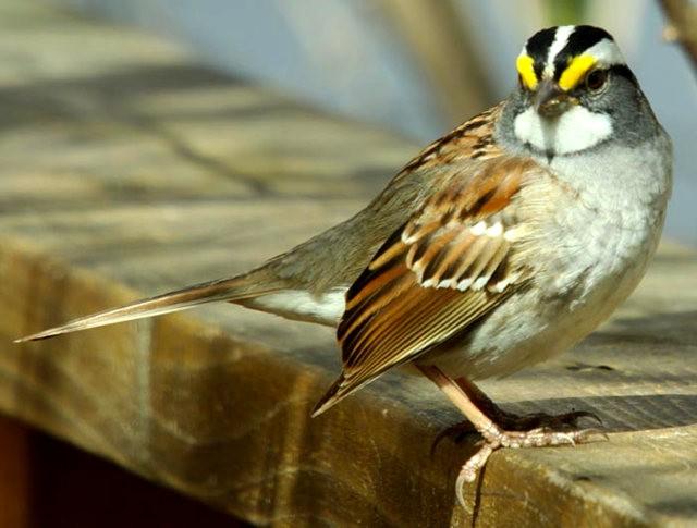 参观春溪自然中心----雀鸟大棚_图1-7