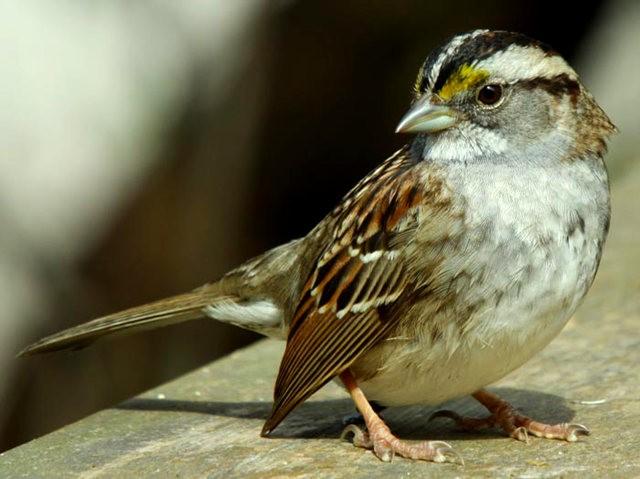 参观春溪自然中心----雀鸟大棚_图1-8
