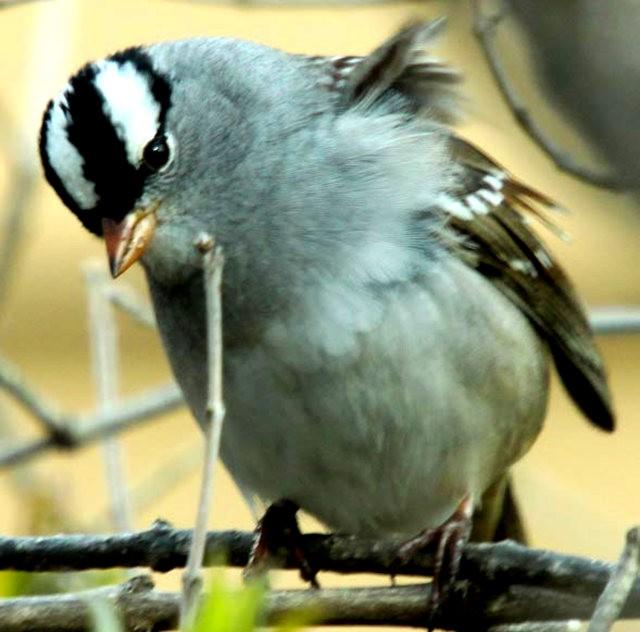 参观春溪自然中心----雀鸟大棚_图1-9