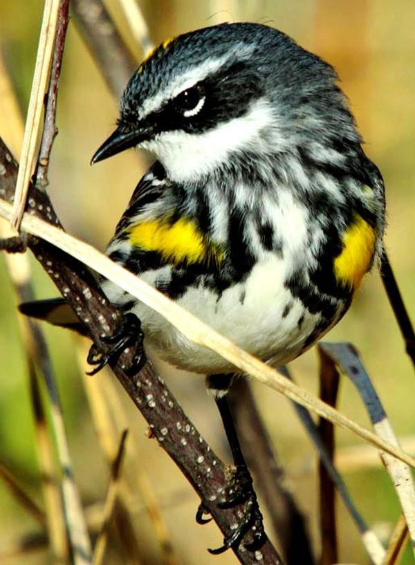 参观春溪自然中心----雀鸟大棚_图1-14