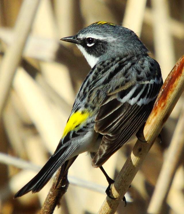 参观春溪自然中心----雀鸟大棚_图1-15