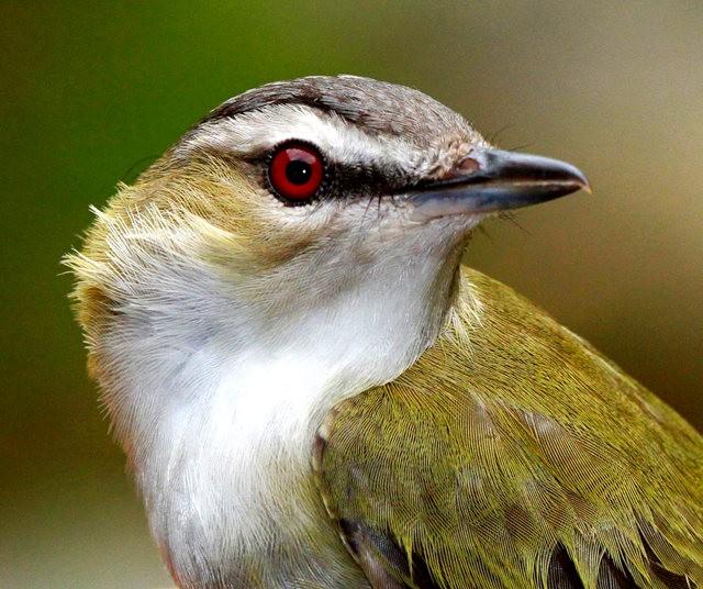 参观春溪自然中心----雀鸟大棚_图1-16