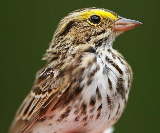 参观春溪自然中心----雀鸟大棚_图1-17