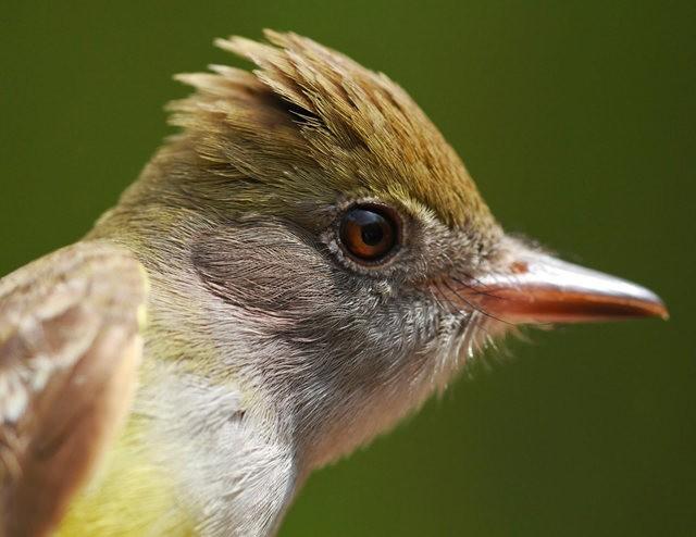 参观春溪自然中心----雀鸟大棚_图1-18