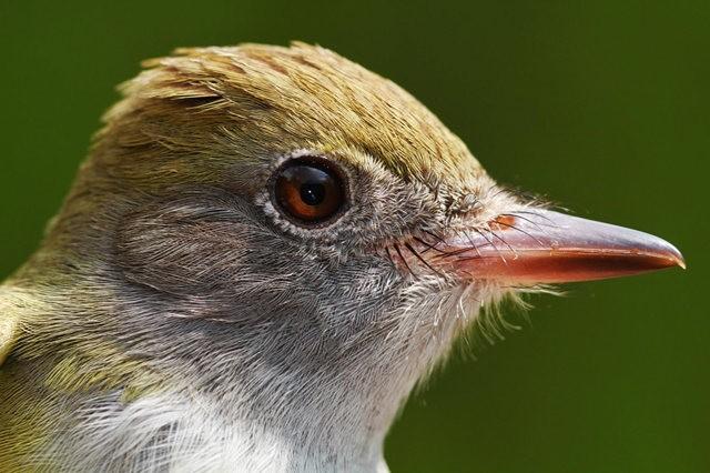 参观春溪自然中心----雀鸟大棚_图1-19