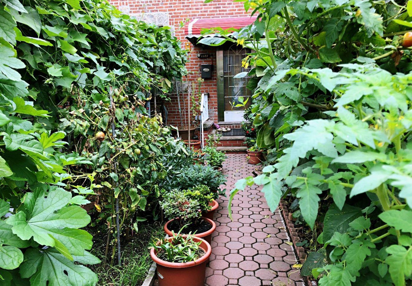 【田螺随拍】路边窗前的小菜园子_图1-6