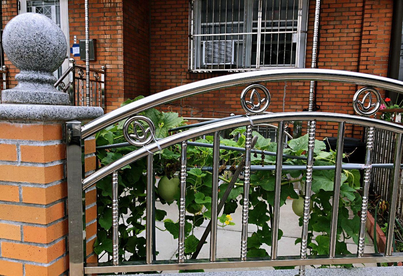 【田螺随拍】路边窗前的小菜园子_图1-10