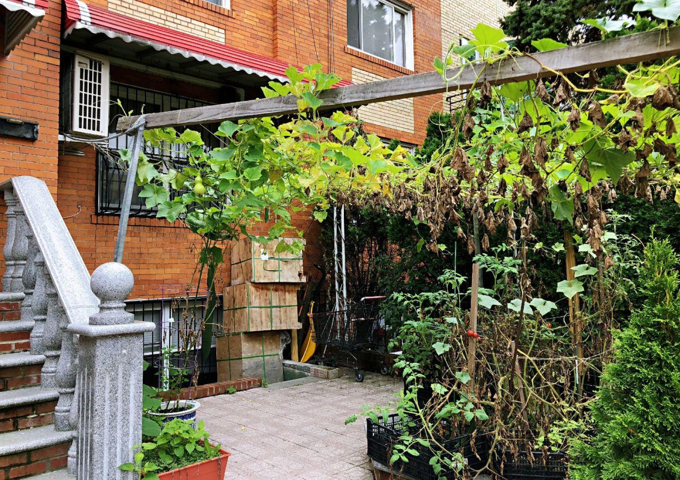 【田螺随拍】路边窗前的小菜园子_图1-25