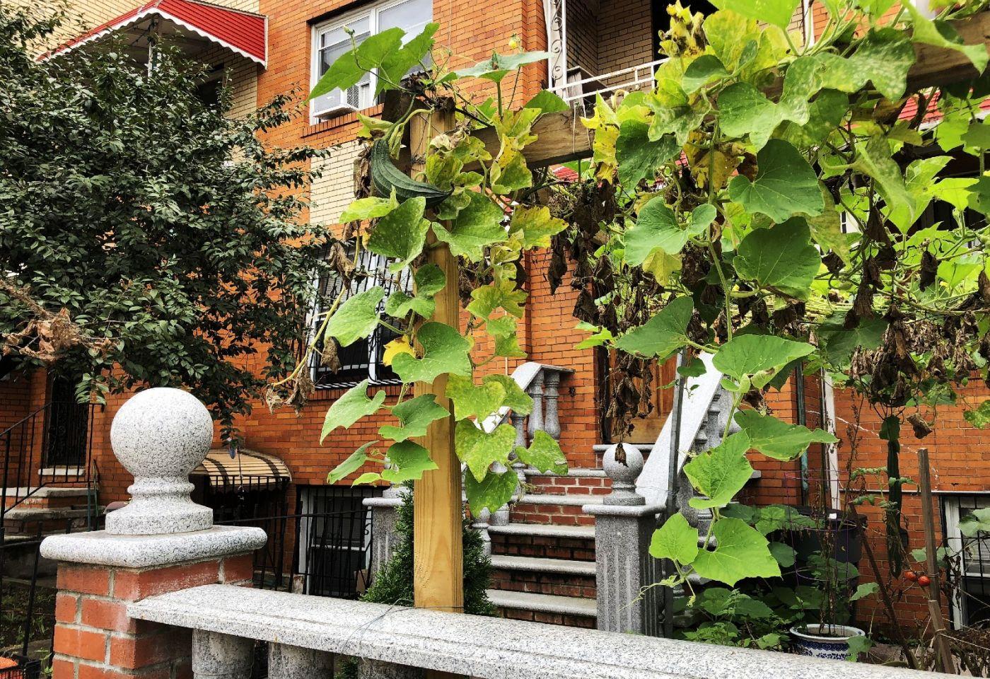 【田螺随拍】路边窗前的小菜园子_图1-27