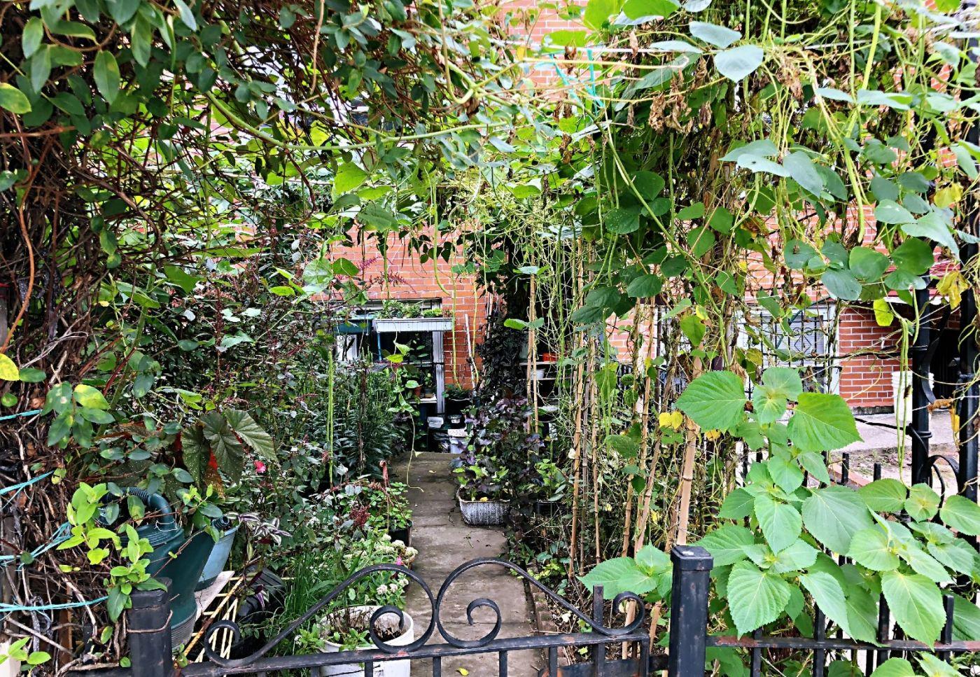 【田螺随拍】路边窗前的小菜园子_图1-31