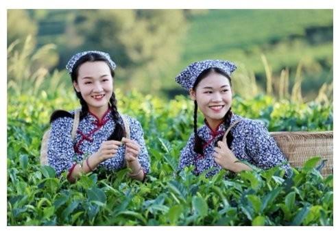 2018首届全国红茶加工制作大赛活动新闻发布会在在英德市积庆里举行 ..._图1-3