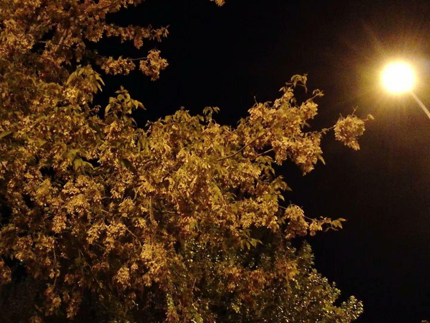 秋夜望秋(图)_图1-1
