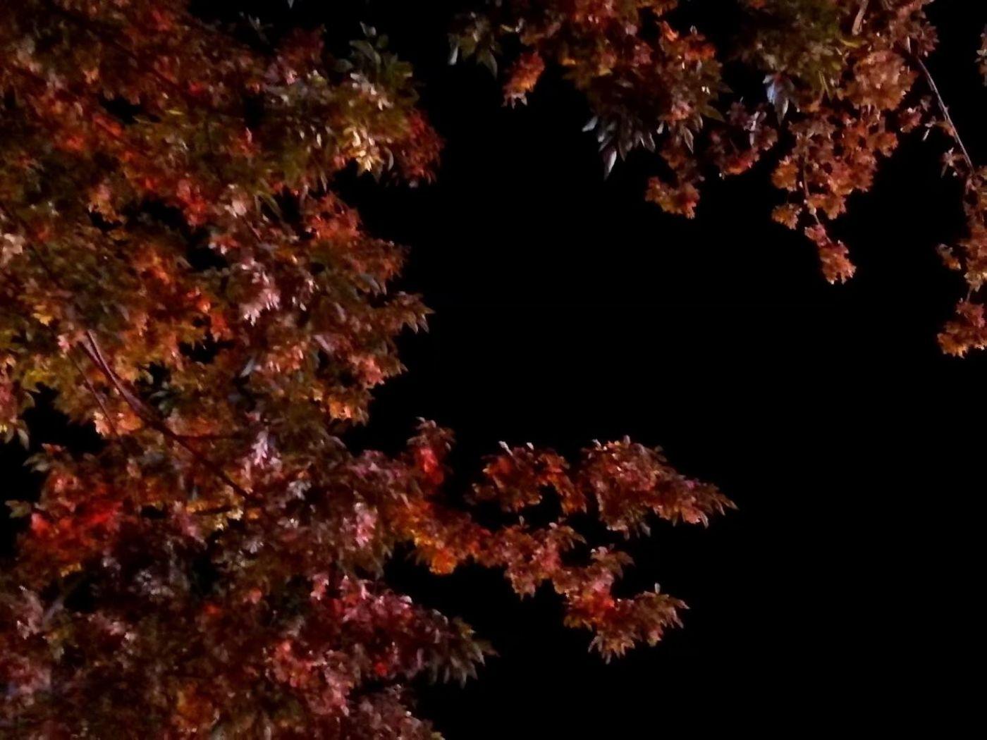 秋夜望秋(图)_图1-7