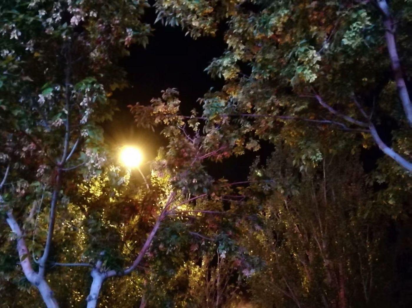 秋夜望秋(图)_图1-11