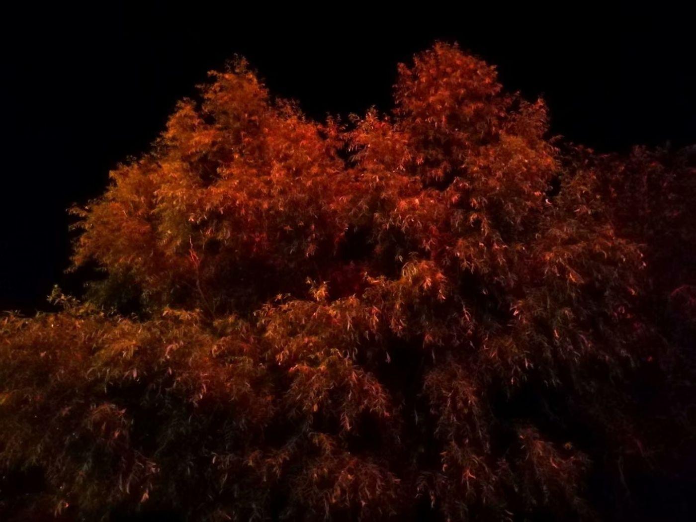秋夜望秋(图)_图1-15