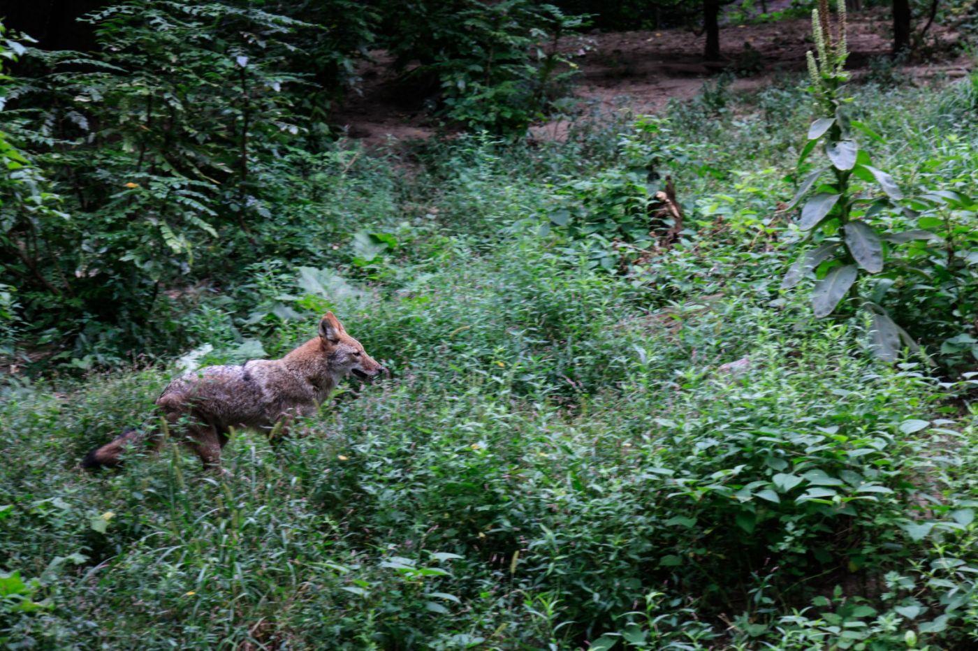 追踪动物的足迹_图1-3