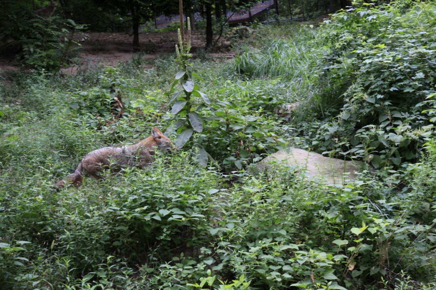 追踪动物的足迹_图1-5