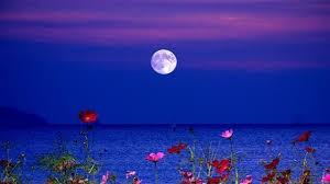 今又是《花,月》_图1-1