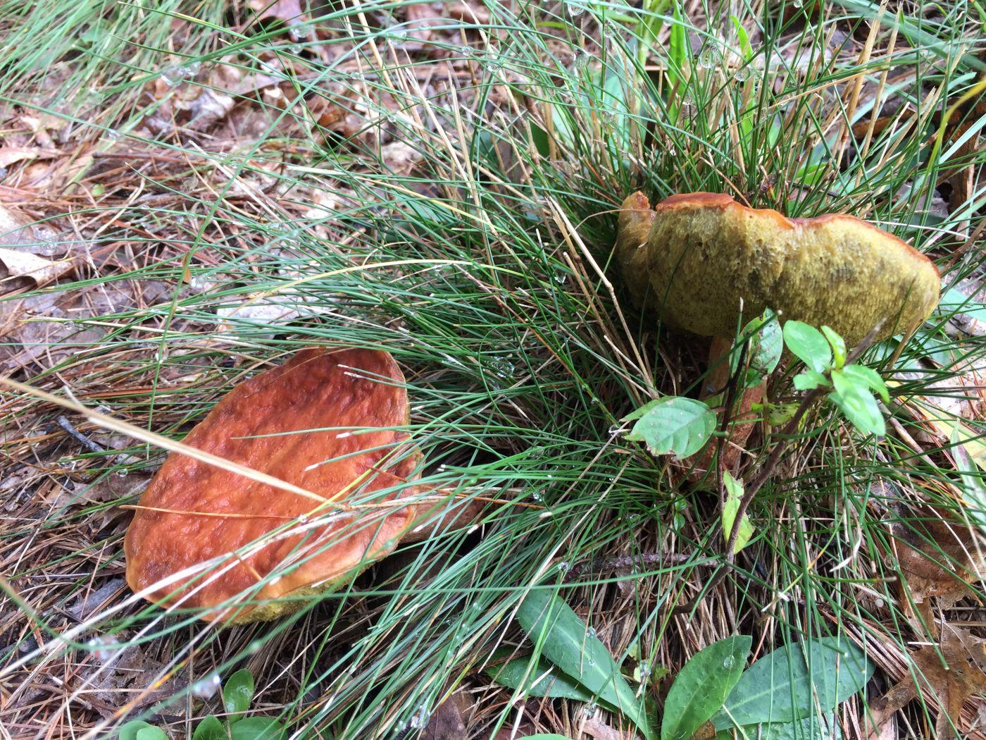 房后小树林拾趣-蘑菇_图1-10