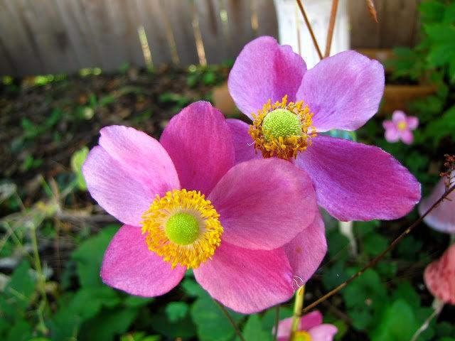 5月里,串门好友的花园---2_图1-1