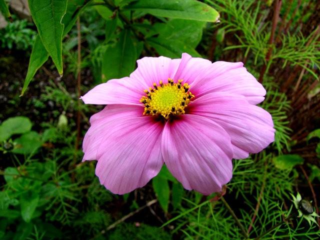5月里,串门好友的花园---2_图1-3