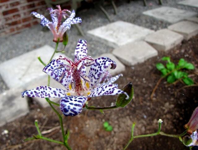 5月里,串门好友的花园---2_图1-10