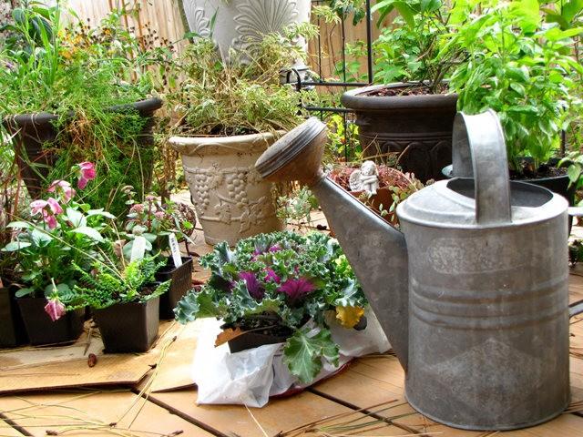 5月里,串门好友的花园---2_图1-12