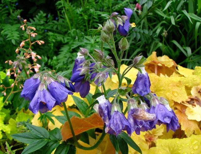 5月里,串门好友的花园---2_图1-14