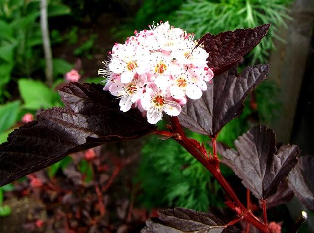 5月里,串门好友的花园---2_图1-15