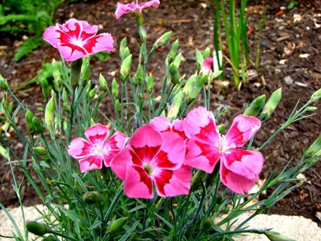 5月里,串门好友的花园---2_图1-16