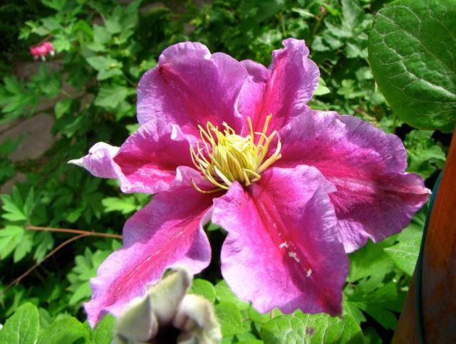 5月里,串门好友的花园---2_图1-17