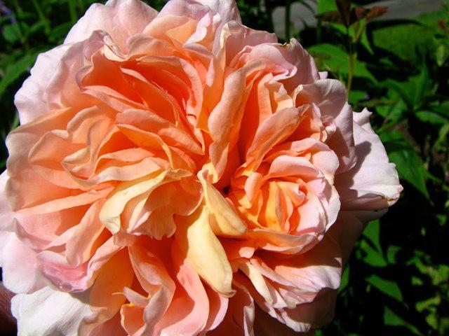 5月里,串门好友的花园---2_图1-23