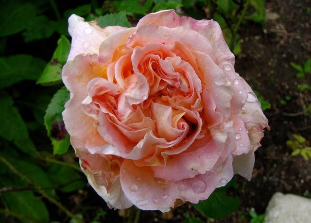 5月里,串门好友的花园---2_图1-24