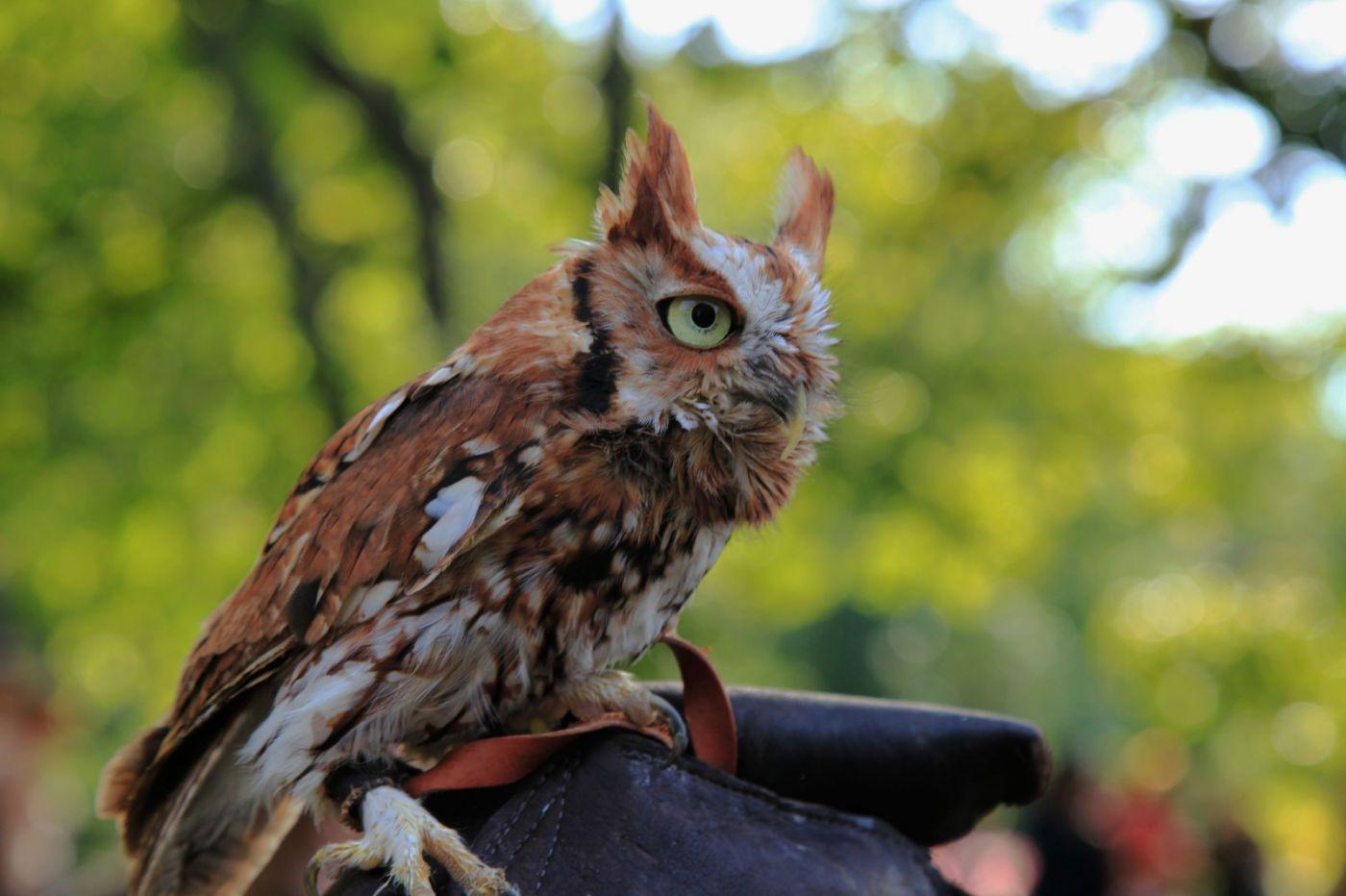 一年一度的崔恩堡公园中世纪节热闹非凡_图1-38