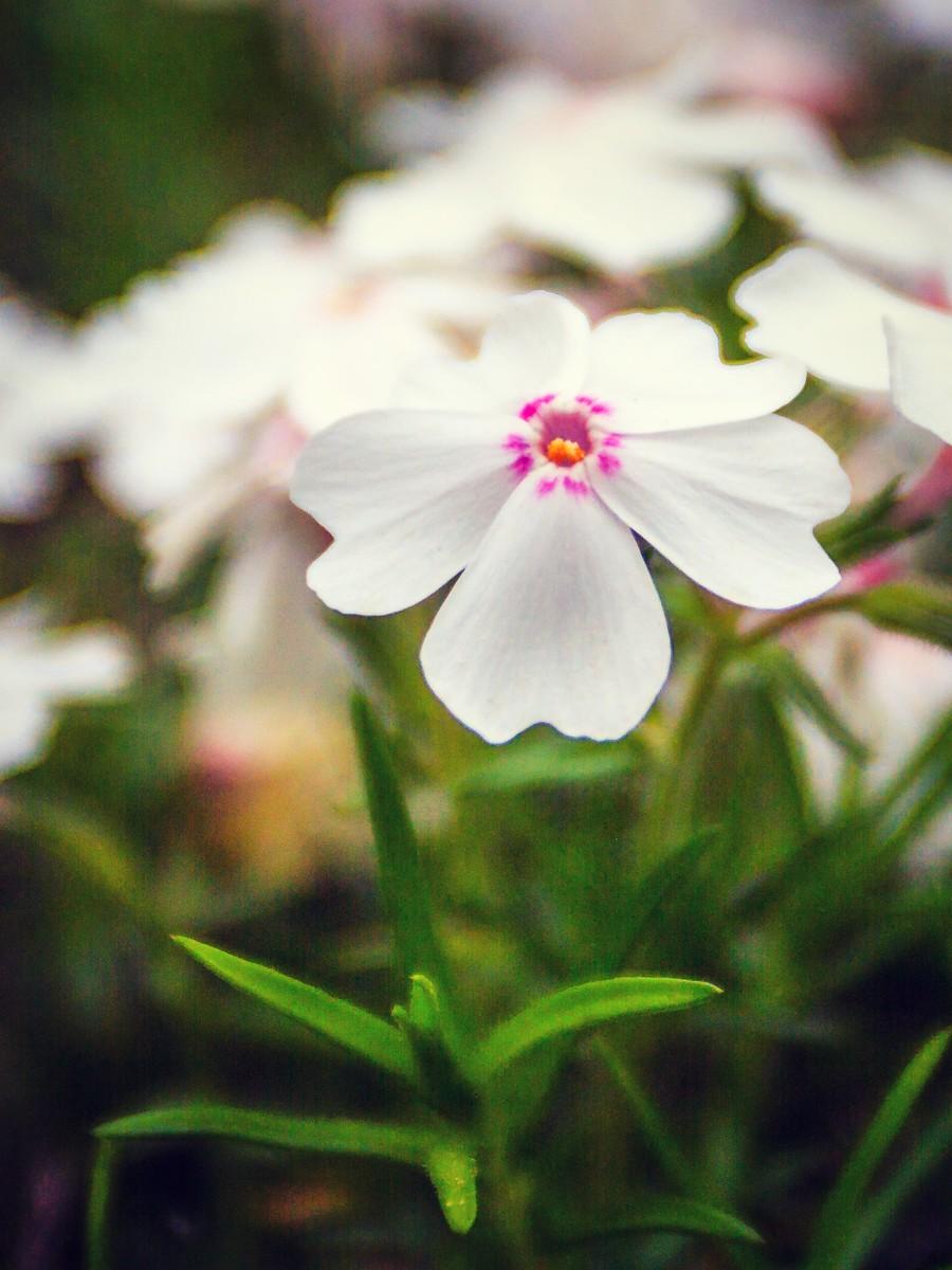春天的记忆_图1-8
