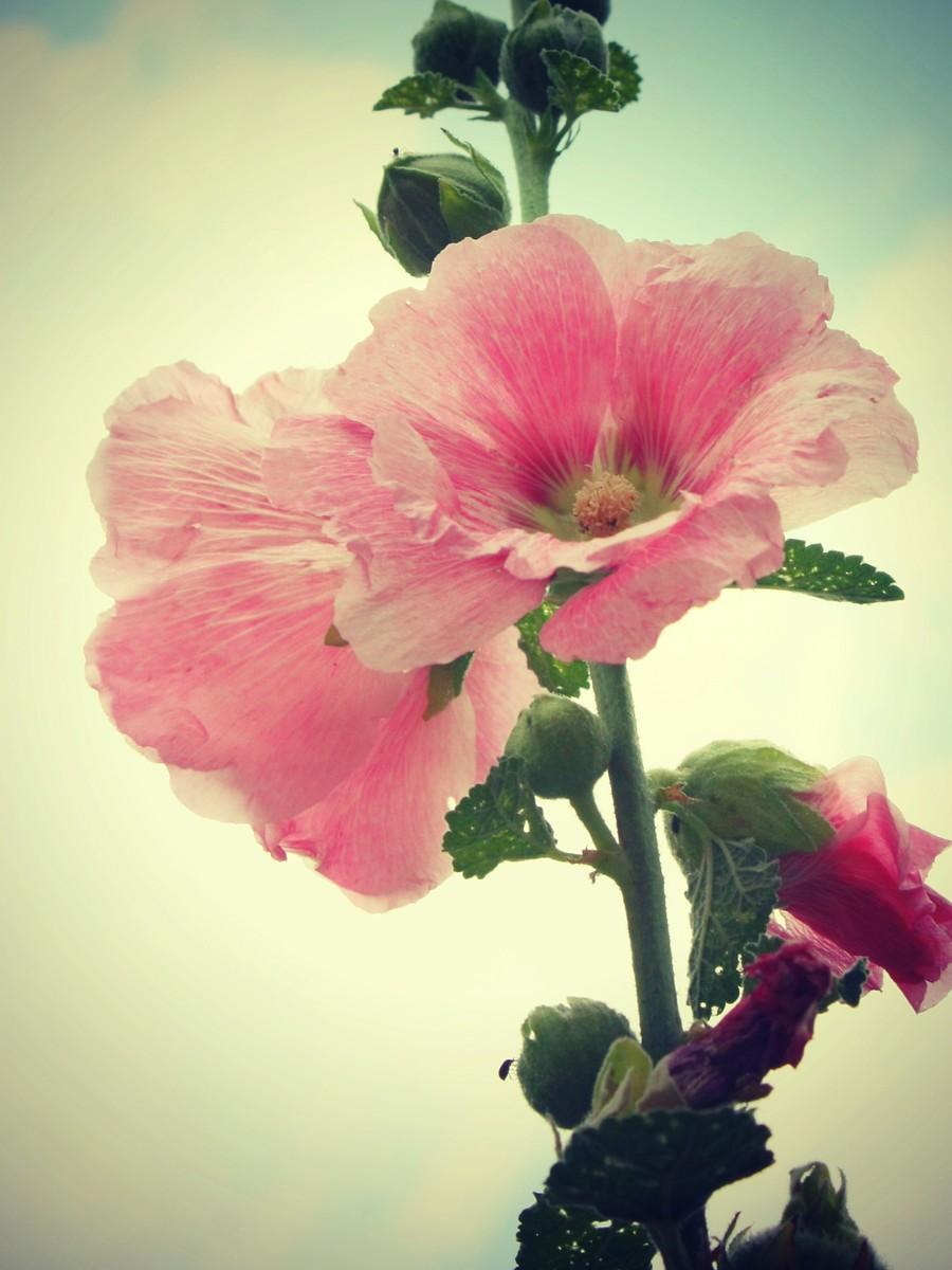 春天的记忆_图1-2