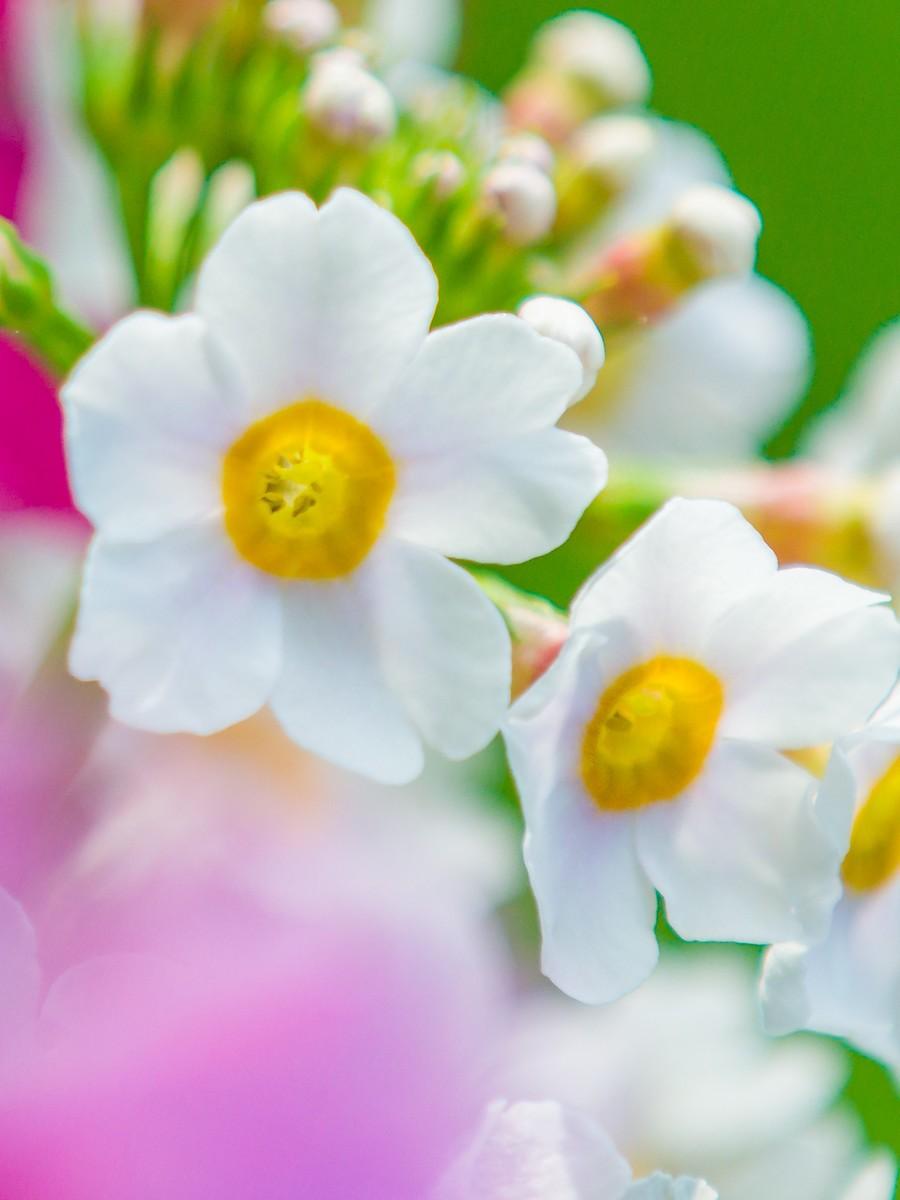 春天的记忆_图1-5