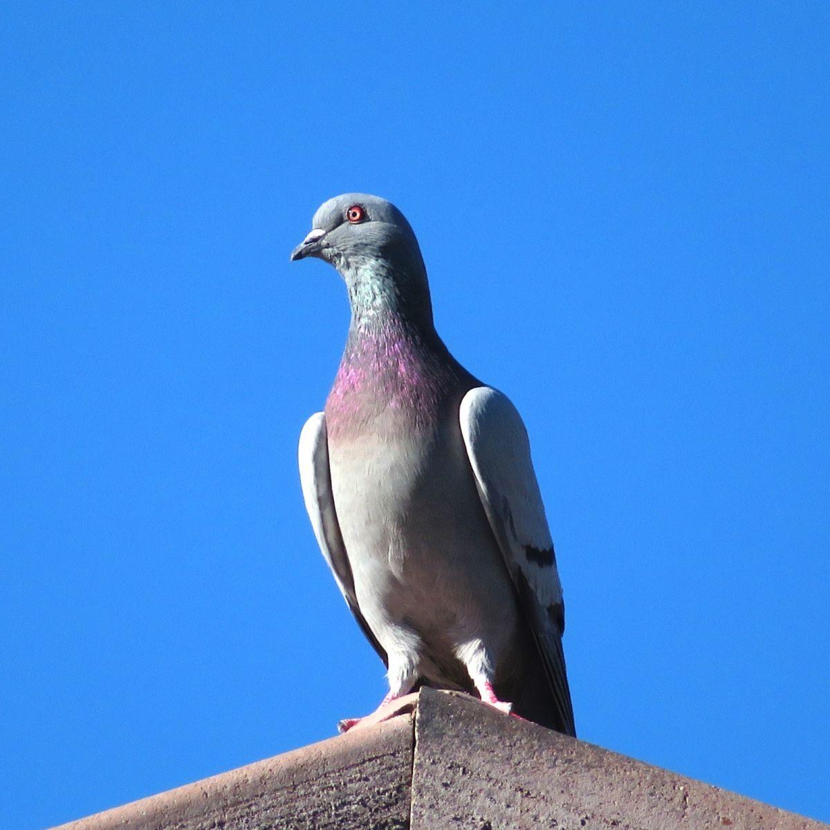 【摄影】蓝天的鸟_图1-5
