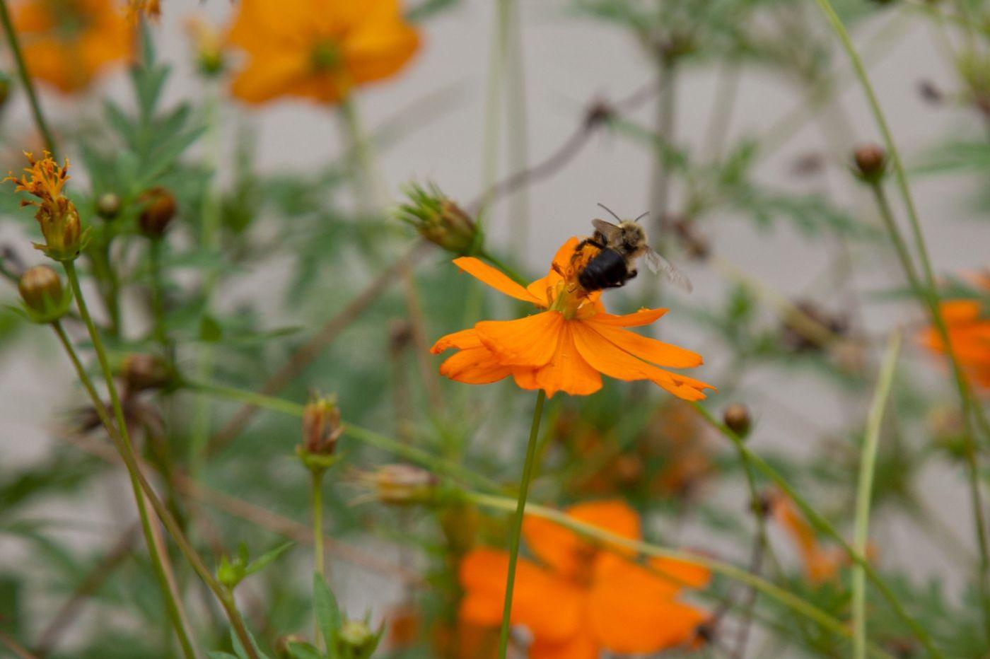 蜂在花丛中_图1-3
