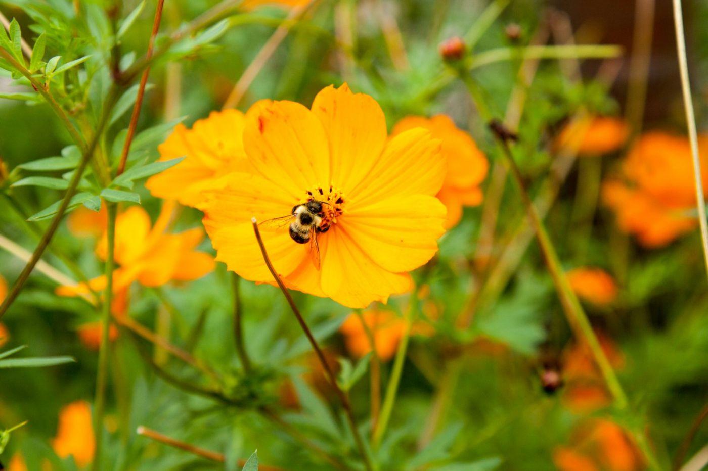 蜂在花丛中_图1-2