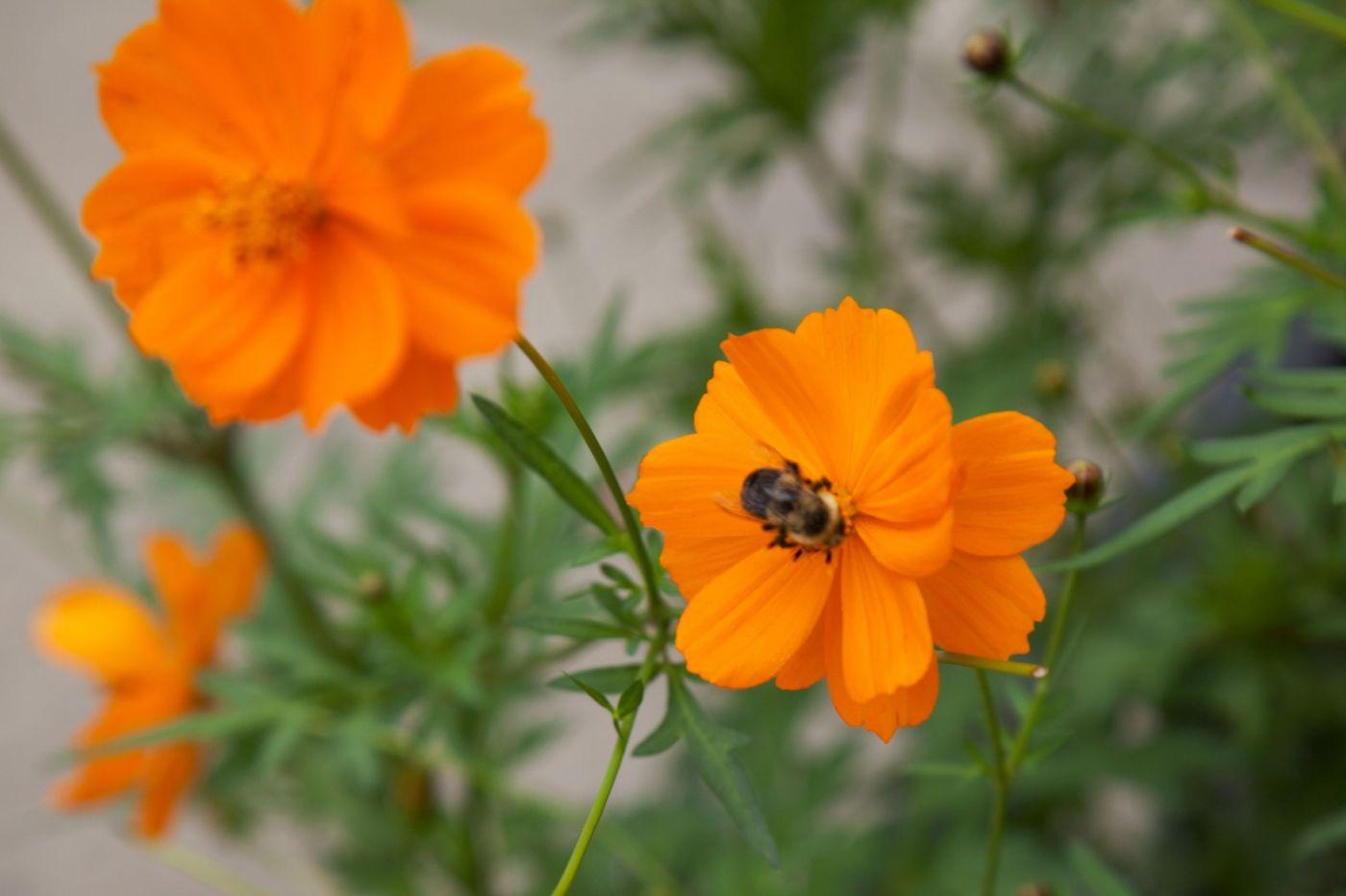 蜂在花丛中_图1-4