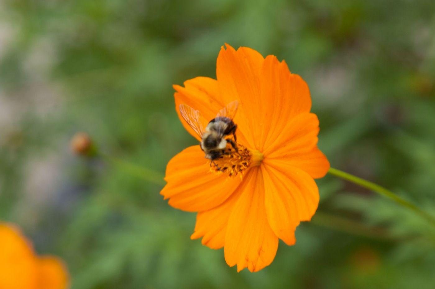 蜂在花丛中_图1-5