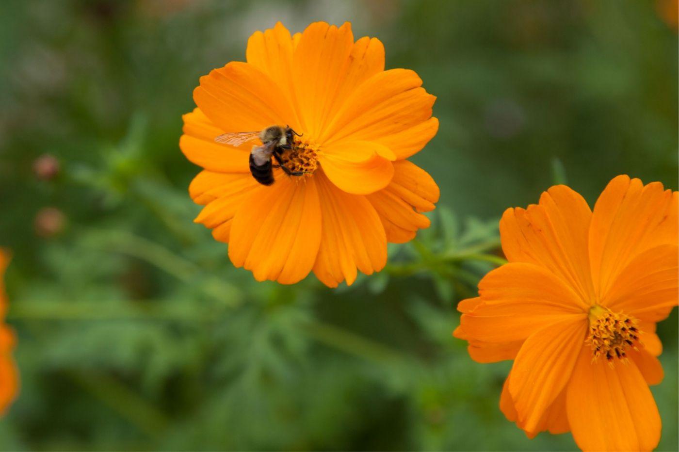 蜂在花丛中_图1-6